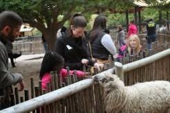 Zoo-kids